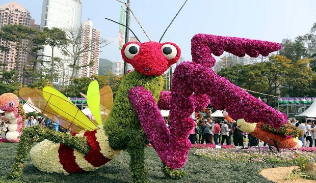 Hong Kong Flower Show 2014