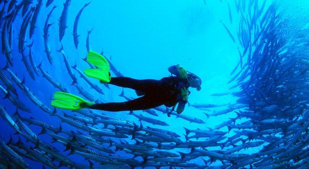 Sipadan Diving in Sabah