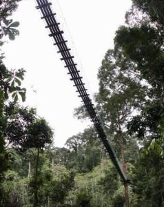 Danum Valley in Sabah