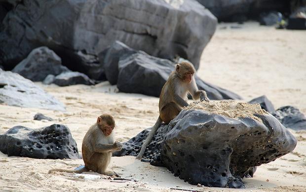 Monkeys on Island